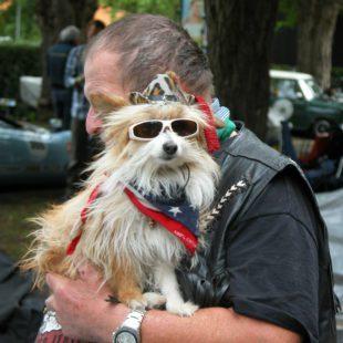 lifestyle motori silver flag castell'arquato vernasca per auto storiche. passione cane