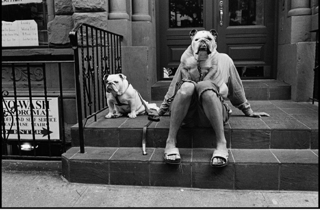 MAM-e arte Elliott erwitt i cani sono come gli umani barboncino